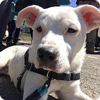 Adopt A Pet :: Cody~meet me!~new pics! - Glastonbury, CT
