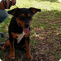 Adopt A Pet :: Onyx - Oviedo, FL