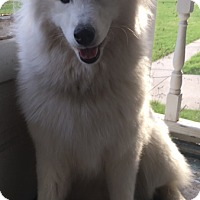 Adopt A Pet :: I'M ADOPTED Nora Wheele - Oswego, IL