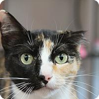 Adopt A Pet :: Sally - Sarasota, FL