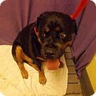 Adopt A Pet :: SUMO