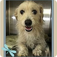 Adopt A Pet :: Whiskers - Rancho Cucamonga, CA