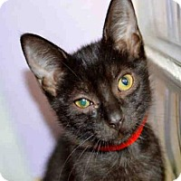 Adopt A Pet :: TRINA - West Palm Beach, FL