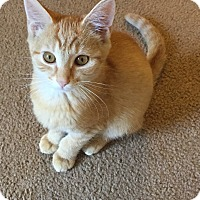 Adopt A Pet :: Lenny - Greensburg, PA