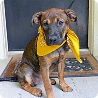 Adopt A Pet :: Rebecca - Baton Rouge, LA