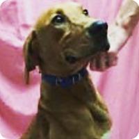 Adopt A Pet :: Wrigley - Liberty Center, OH