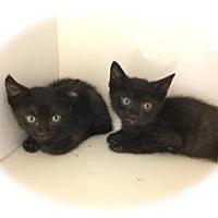 Adopt A Pet :: Lana - Herndon, VA