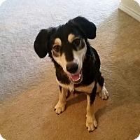 Adopt A Pet :: Roscoe - Wichita Falls, TX