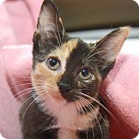Adopt A Pet :: Astrid - New York, NY