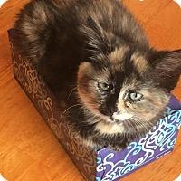 Adopt A Pet :: Carlie - Palatine, IL