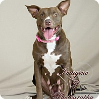 Adopt A Pet :: Holly - Newcastle, OK