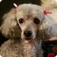 Adopt A Pet :: Faith - Burlington, WA