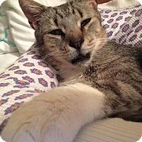 Adopt A Pet :: BUDDY! - Philadelphia, PA