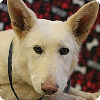 Adopt A Pet :: Zeus - Roosevelt, UT