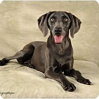 Adopt A Pet :: Delta - Las Vegas, NV