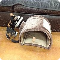 Adopt A Pet :: Francine - Lake Charles, LA