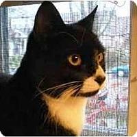 Adopt A Pet :: Mack - Portland, OR