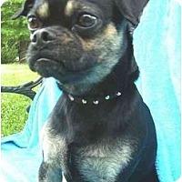Adopt A Pet :: Noah - Mooy, AL