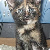 Adopt A Pet :: Kore - Reston, VA