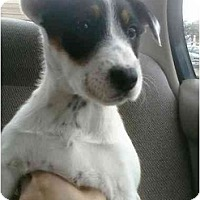 Adopt A Pet :: Topsy - Fulton, MD
