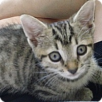 Adopt A Pet :: Tigger - Ft. Lauderdale, FL