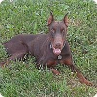 Adopt A Pet :: Phoenix - New Richmond, OH