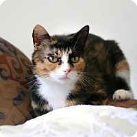 Calico Cat for adoption in Burlington, Ontario - Peaches