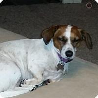 Adopt A Pet :: Betty-Meet Her!so good w/kids - Norwalk, CT