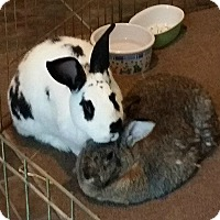 Adopt A Pet :: Marcie and Speckles - Williston, FL