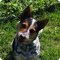 Adopt A Pet :: Lacey-adoption pending - Delano, MN