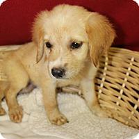 Adopt A Pet :: Snow White - Waldorf, MD