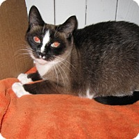 Adopt A Pet :: Felicia - Oakland, OR