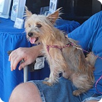 Adopt A Pet :: Lucy - Minneola, FL