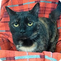 Adopt A Pet :: Eetie - Princeton, WV