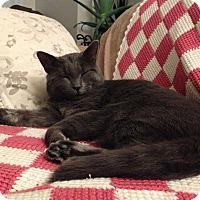 Adopt A Pet :: Reggie - Edmonton, AB