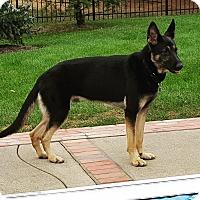 Adopt A Pet :: Meeko - Louisville, KY