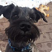 Adopt A Pet :: OTTO - Raleigh, NC
