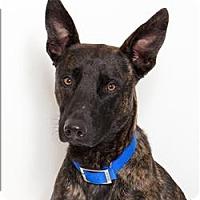 Adopt A Pet :: Sunny - San Luis Obispo, CA