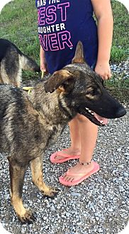 German Shepherd Dog Dog for adoption in Fort Worth, Texas - Harmony