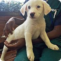 Adopt A Pet :: Chi Chi - BIRMINGHAM, AL