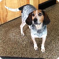 Adopt A Pet :: Rachel - Cranston, RI