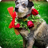 Adopt A Pet :: Marcie - Salt Lake City, UT