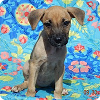 Adopt A Pet :: Teagan (6 lb) Video! - West Sand Lake, NY