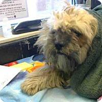 Adopt A Pet :: A700566 - Sacramento, CA