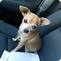 Adopt A Pet :: Bug - Oakhurst, NJ