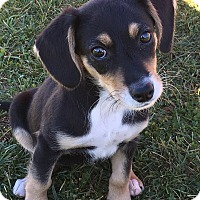 Adopt A Pet :: Galaxee - New Oxford, PA