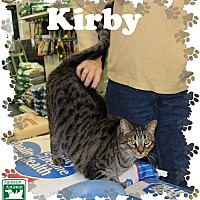 Adopt A Pet :: Kirby - Fallston, MD