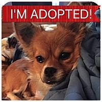 Adopt A Pet :: Ditto - Regina, SK