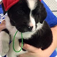 Adopt A Pet :: THE FAB FIVE - PARSIPPANY, NJ