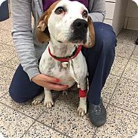 Adopt A Pet :: Montie - Avon, OH